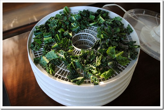 Kale Chips Before Drying | Test Kitchen Tuesday