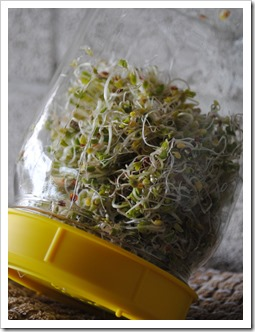 Grow Your Own Sprouts | Test Kitchen Tuesday