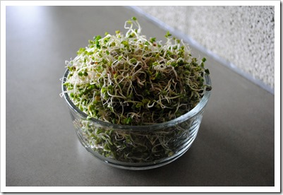 Growing Sprouts   Test Kitchen Tuesday